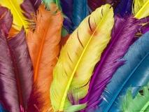 Цветные перья
