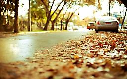 Осенняя дорогоа