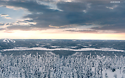 Тайга зимой