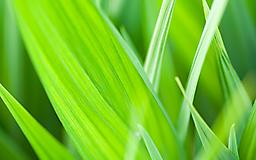 Сочная зеленая трава