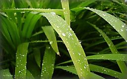 Зеленая трава с росой
