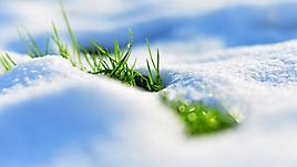 Зеленая трава и снег