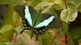 Зеленая бабочка на листике