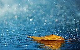 Осенний лист под дождем