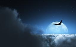 Орел в ночном небе