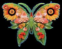 Бабочка цветочная